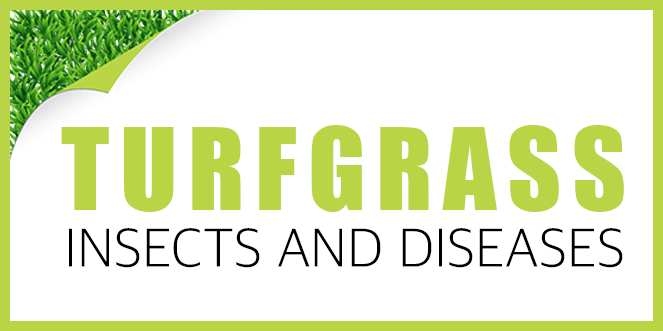 OnlinePestControlCourses.com CEU Course - Turfgrass Insects and Diseases